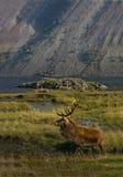 De Schotse Hooglanden Royalty-vrije Stock Foto's