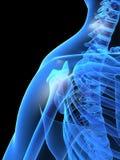 De schouder van de röntgenstraal Stock Fotografie