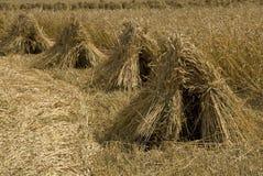 De schoven van de tarwe in een rij royalty-vrije stock afbeelding