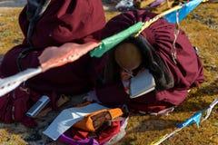 De schrijvende vrouwelijke lama Stock Fotografie
