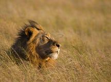 De schrijver uit de klassieke oudheid van de leeuw Royalty-vrije Stock Fotografie