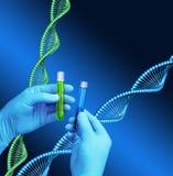 De schroefmodel van DNA van het reageerbuizenlaboratorium Stock Fotografie