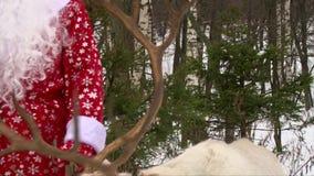De schuine stand van rendiergeweitakken boven en beneden schot, Santa Claus-holdingsrendier door teugels stock videobeelden