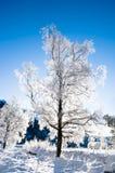 De scène van de winter van Noorwegen Stock Afbeeldingen