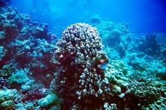 De scuba-duiker van de groep in water. Royalty-vrije Stock Afbeelding
