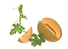 De sectie en het segment van de meloen stock afbeelding