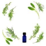 De Selectie van het Kruid van Aromatherapy Stock Afbeelding