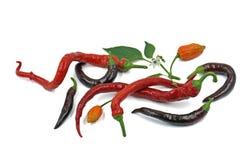 De selectie van de Spaanse peperpeper met blad en bloesem op witte achtergrond royalty-vrije stock afbeeldingen