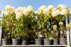 De selectie van de tuinbloem, botanische winkel royalty-vrije stock fotografie