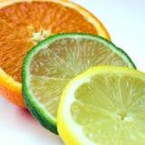 De selecties van de citrusvrucht Stock Fotografie