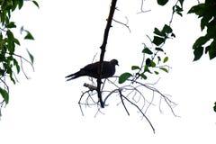 In de selectieve bladeren van de nadruk tropische boom met takken en tropische vogelzitting op een takje royalty-vrije stock foto's