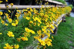 De selectieve rij van Nadruk kleine bloemen in zomer bij natuurreservaat van Bangkok Thailand voor Achtergrond stock afbeelding