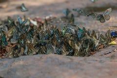 De selectieve vlinders van de nadrukgroep ter plaatse en vliegend op aardachtergrond Vage De steel verwijderde van agamemno van G stock foto's