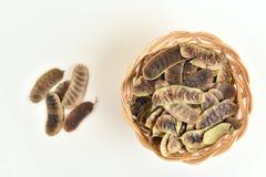De seneplant van Alexandrië, Alexandrian-seneplant Indische seneplant Royalty-vrije Stock Foto