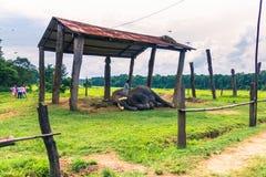 9 de septiembre de 2014 - elefantes entrenados en el parque nacional de Chitwan, Fotografía de archivo