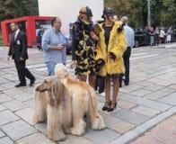 22 DE SEPTIEMBRE DE 2016: Dos muchachas y perros de moda después del desfile de moda de EMILIO PUCCI, Milan Fashion Week Spring / Imagen de archivo
