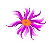 De sering van de bloem Stock Foto's