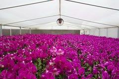 De serre van de bloem stock foto