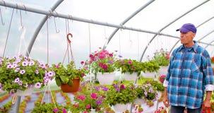 De Serre van tuinmansupervising plants in stock footage