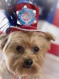 11 de setembro cão patriótico Fotos de Stock