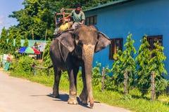 2 de setembro de 2014 - cavaleiro do elefante em Sauraha, Nepal Imagens de Stock
