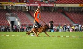 7 de setembro de 2014 a mostra de cão-pastor alemão a mais grande de Nurnberg no alemão Imagens de Stock