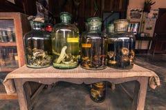 21 de setembro de 2014: Partes animais em umas garrafas na proibição Xang Hai, Laos Imagem de Stock
