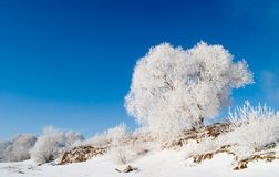 De Siberische winter royalty-vrije stock afbeelding