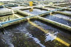 De Siervissen van het landbouwbedrijfkinderdagverblijf zoetwater in het Opnieuw circuleren van Aquicultuursysteem stock afbeeldingen