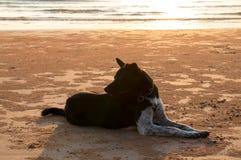 De silhouethond zit op strandzand Royalty-vrije Stock Foto's