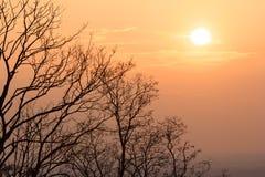 De silhouetten en de zonsondergang van de boom Stock Foto's
