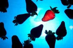 De Silhouetten van aardbeien in Blauw Water royalty-vrije stock foto's