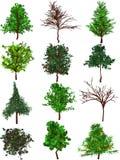 De silhouetten van bomen. Royalty-vrije Stock Foto's