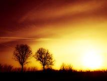 De Silhouetten van de boom in de zonsondergang royalty-vrije stock afbeeldingen