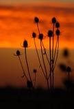 De silhouetten van Dawn Stock Fotografie