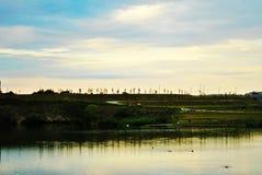 De silhouetten van de bomen op de horizon Stock Foto