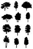 De silhouetten van de boom Stock Foto