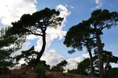 De silhouetten van de boom over hemel Royalty-vrije Stock Foto's