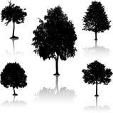 De silhouetten van de boom. [Vector]. Stock Fotografie