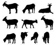 De silhouetten van de geit Stock Afbeeldingen