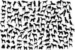 De silhouetten van de hond Royalty-vrije Stock Fotografie