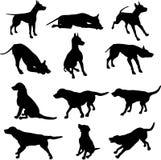 De Silhouetten van de hond Royalty-vrije Stock Afbeeldingen