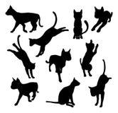 De silhouetten van de huisdierenkat Stock Foto's
