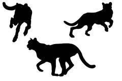 De silhouetten van de jachtluipaard met het cliping van weg Stock Foto