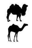 De silhouetten van de kameel op wit Royalty-vrije Stock Afbeelding