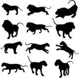 De Silhouetten van de leeuw Stock Afbeelding