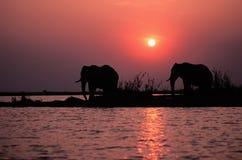 De silhouetten van de olifant Stock Afbeeldingen