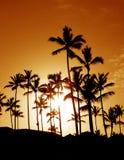 De Silhouetten van de Palm van de kokosnoot royalty-vrije stock foto's