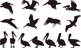 De silhouetten van de pelikaan Stock Afbeelding