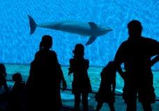 De Silhouetten van de Toeschouwer van het aquarium stock foto